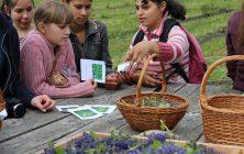 """Fiatalok ismerkedtek az """"Erdélyi Gyógynövénykerttel"""""""